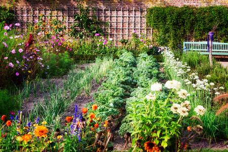 Huerto a finales del verano. Hierbas, flores y verduras en el jardín de jardín trasero. Jardinería ecológica Foto de archivo