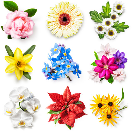 flower leaf: Flower collection isolated on white background. Set of spring and summer garden flowers. Floral design. Top view, flat lay  Stock Photo