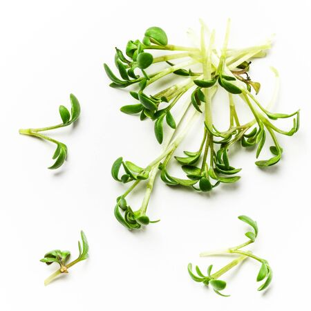 Fresh green cress salad on white background, top view, flat lay