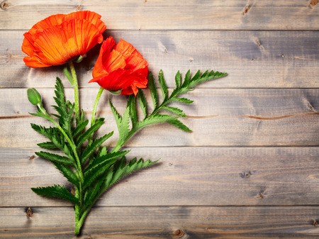 Red poppy flower with bud and leaves on wooden background. Summer garden flowers. Top view, copy space