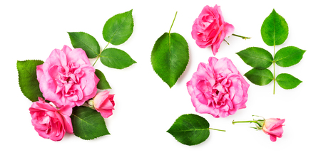 Pink rose flowers composition and bouquet isolated on white background. Flower arrangement. Flat lay, top view