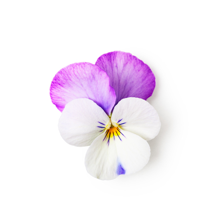 Pansy flower isolated on white background clipping path included. Spring garden viola tricolor. Top view, flat lay