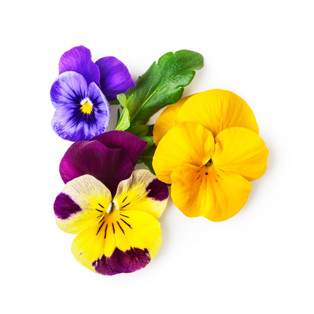 Pansy flowers or spring garden viola tricolor on white background clipping path included. Flower arrangement and floral design. Top view, flat lay Imagens