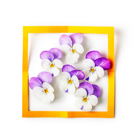 Floral frame. Composition of pansy or viola tricolor flowers and paper isolated on white background clipping path included. Greeting card and design element. Top view, flat lay Stok Fotoğraf