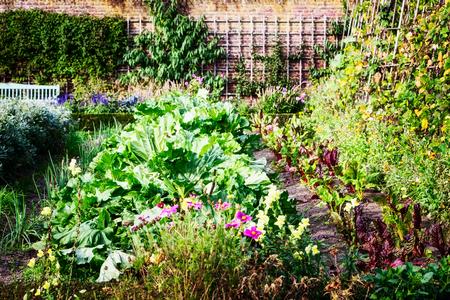 Sunny vegetable garden in late summer. Flowers, herbs and vegetables in backyard formal garden. Eco friendly gardening, leisure activities