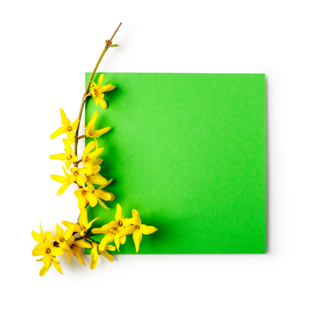 Easter greeting card with forsythia flowers and green note paper. Holiday composition isolated on white background clipping path included. Spring arrangement and design element, flat lay Stock Photo