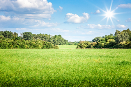 Green grass field with trees blue sky, clouds and sun. Nature landscape in summer