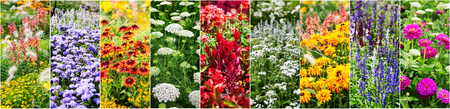 Colorful flower garden background in summer. Flower bed with echinacea, sage, snapdragon, zinnia, marigold flowers collection. Gardening and beauty in nature banner 写真素材