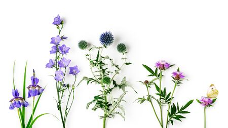 Knapweed, thistle, campanula and iris flower collection. Pink and blue flowers in spring and summer garden arrangement isolated on white background. Top view, flat lay. Floral design element