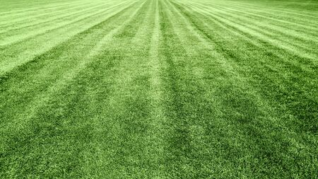 stadium green grass lawn background, soccer football field, design element Archivio Fotografico - 129495389