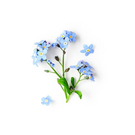 Blue forget me not flowers creative composition isolated on white background clipping path included. Springtime and mothers day concept. Design element, flat lay, top view Archivio Fotografico