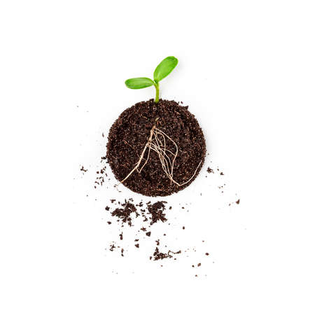 Soil with green sprout isolated on white background. Seedling growing out from earth creative composition. Top view, flat lay. Environment conservation concept