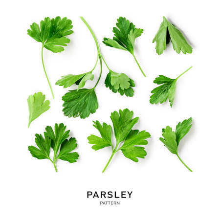 Fresh parsley leaves creative pattern and collection . Herbs composition isolated on white background. Top view, flat lay. Floral design elements. Healthy eating and dieting concept