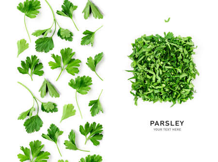 Creative layout with fresh parsley leaves. Bunch and chopped parsley composition on white background. Top view, flat lay. Floral design elements. Healthy eating and dieting concept