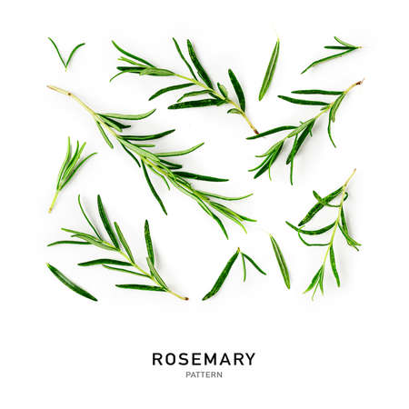Rosemary twigs and leaves creative pattern and collection isolated on white background. Top view, flat lay. Floral design elements. Healthy eating and alternative medicine concept