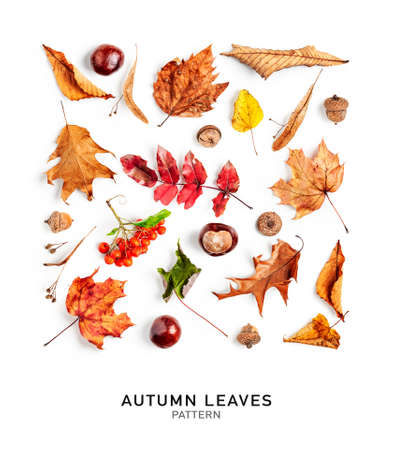 Autumn leaves creative background. Composition and pattern made of colorful fall leaves and fruits isolated on white background. Top view, flat lay. Floral design