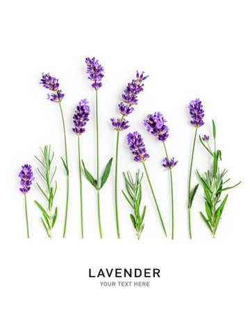 Lavender flowers and leaves creative layout isolated on white background. Top view, flat lay. Floral composition and design. Healthy eating and alternative medicine concept Stock Photo