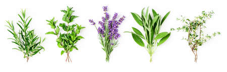 Rosemary, mint, lavender, sage and thyme collection. Creative banner with fresh herbs bunch on white background. Top view, flat lay. Floral design. Healthy eating and alternative medicine concept Stock Photo