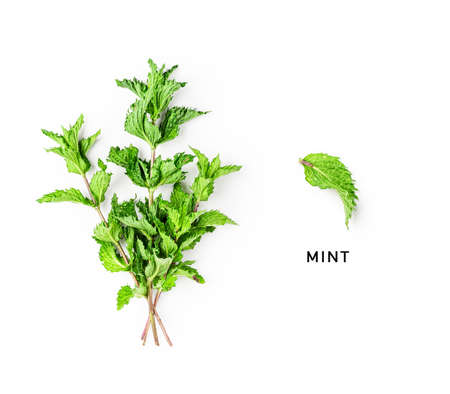 Mint bunch and leaf creative layout isolated on white background. Top view, flat lay. Floral composition and design. Healthy eating and alternative medicine concept