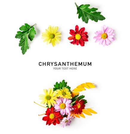 Chrysanthemum flowers with leaves creative layout. Autumn flower composition on white background. Top view, flat lay. Floral design elements