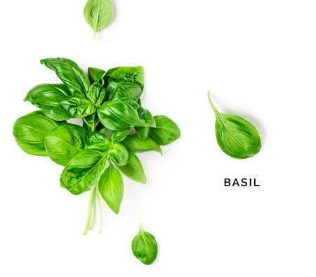 Creative layout with fresh basil leaves. Bunch and single basil leaf composition on white background. Top view, flat lay. Floral design elements. Healthy eating and dieting food concept