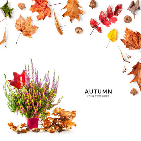 Autumn leaves and heather flowers creative layout. Flowerpot with multicolor erica bunch, dry oak leaves, acorns and maple leaf composition on white background. Floral design Stock Photo