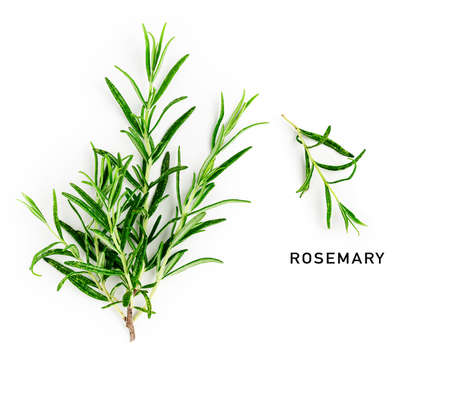 Rosemary twig and leaves creative layout and composition isolated on white background. Top view, flat lay. Floral design elements. Healthy eating and alternative medicine concept