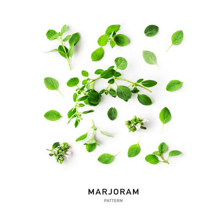 Marjoram twigs, leaves and flowers creative pattern and collection isolated on white background. Top view, flat lay. Floral design elements. Healthy eating and alternative medicine concept Zdjęcie Seryjne