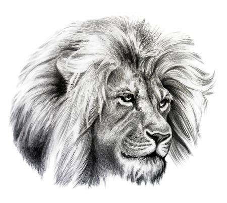 lion dessin: Dessin au crayon de la tête de lion. Isolé sur fond blanc.