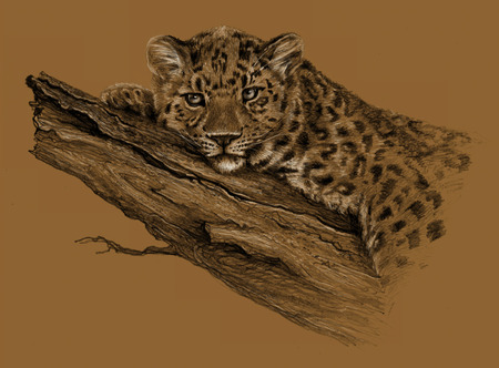 carnivores: Sketch - Leopard Leopard lying on the tree. On brown background. Detailed pencil drawing Stock Photo