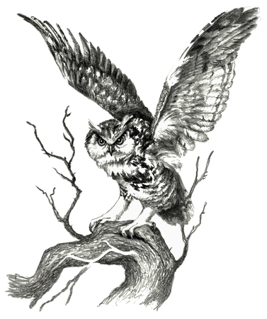 Owl sketch. Pencil drawing isolate on white background