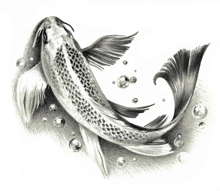 koi: Sketch - Japanese koi fish isolated on a white