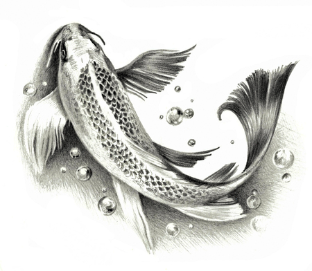 Sketch - Japanese koi fish isolated on a white