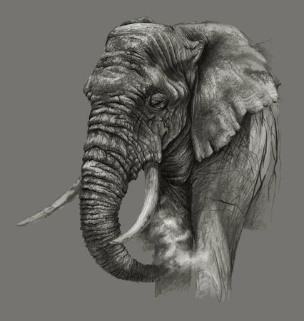 Schets -Afrikaanse olifant op een grijze achtergrond. Gedetailleerde potloodtekening Stockfoto