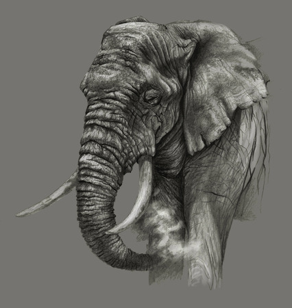 biggest animal: Sketch -African elephant on gray background. Detailed pencil drawing