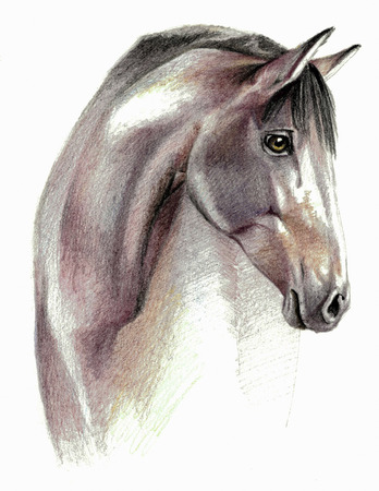 hand with pencil: Color sketch - Horse profail on white background. Detailed pencil drawing