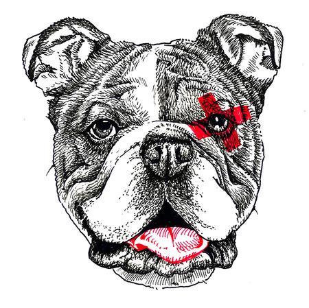 Staffordshire bull terrier portrait. Print and pattern. Hand drawing