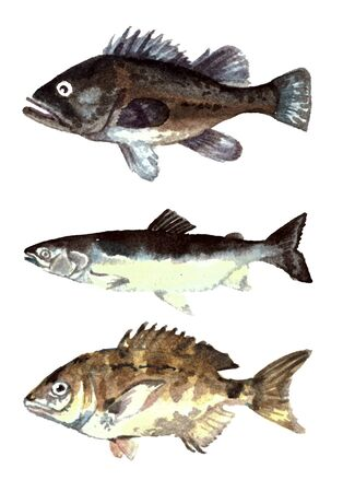 Collection sea fishes Reklamní fotografie - 75084481