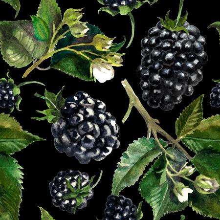 Pattern blackberries on a drips of watercolor background, watercolor painting Reklamní fotografie - 75090485