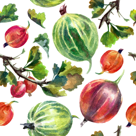 Watercolor pattern with gooseberries isolated on white background. Print Reklamní fotografie - 75090480