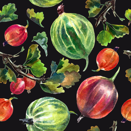 Watercolor pattern with gooseberries isolated on black background. Print Reklamní fotografie - 75090483