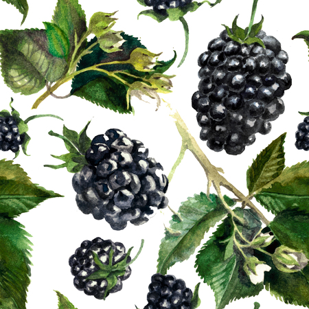Pattern blackberries on a drips of watercolor background, watercolor painting
