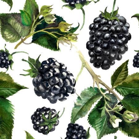 Pattern blackberries on a drips of watercolor background, watercolor painting Reklamní fotografie - 75090482