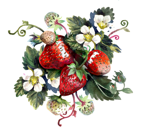 Strawberries isolated on white. Watercolor painting