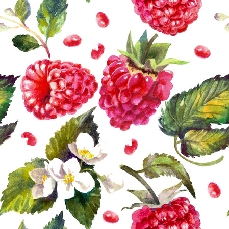 Raspberries isolated on white. Watercolor painting, pattern Reklamní fotografie