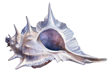 Watercolor blue seashell on a white background. Hand painting