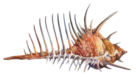Orange shell with spikes isolated on a white background.