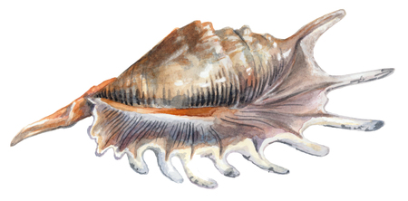 Shiny shell with stripes isolated on white background. Stock Photo
