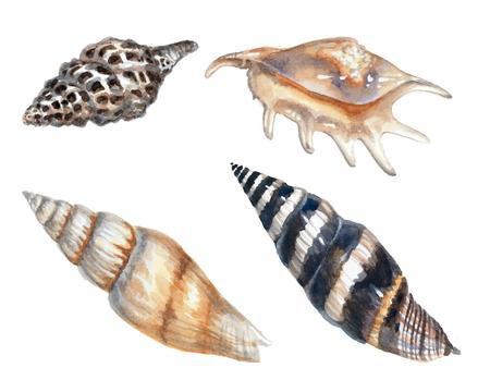 Set beautiful seashells isolated on white background. Watercolor painting Reklamní fotografie