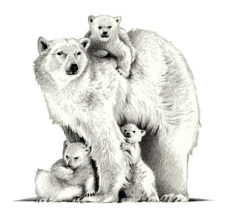 Polar bear with three cubs. pencil sketch